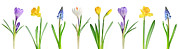 Growing Posters - Spring flowers  Poster by Elena Elisseeva