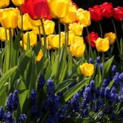 Spring Flowers Square Print by Carol Groenen