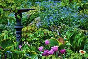 Spring Garden  Print by Elaine Manley
