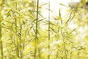 Daniel Kasztelan - Spring Grasses