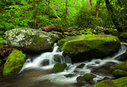 Gsmnp Photos - Spring Green by Donna Eaton