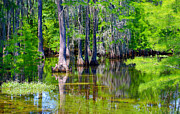 Large Format Prints - Spring Green Swamp Print by Diana  Tyson