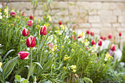 Tulip Bed Framed Prints - Spring Has Sprung Framed Print by Anne Gilbert