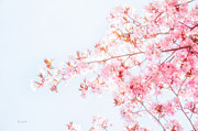 Calming Prints - Spring Impressions Print by Bob Orsillo