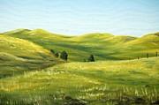 AnnaJo Vahle - Spring in California