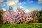 Peach Orchard Posters - Spring in Kentucky Poster by Darren Fisher