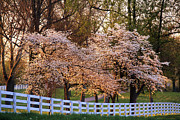 Board Fence Prints - Spring in the Bluegrass - FS000247 Print by Daniel Dempster
