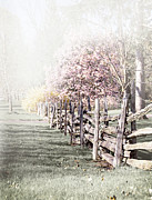 Old Wooden Fence Prints - Spring landscape with fence Print by Elena Elisseeva