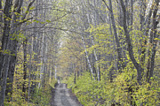 Country Dirt Roads Photos - Spring Lane by Alan L Graham