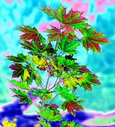 Color Enhanced Art - Spring Maple Leaf Design by Will Borden