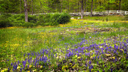 Connecticut Scenery Photos - Spring Meadow by Bill  Wakeley