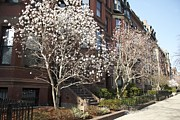 Amazing Jules - Spring on Commonwealth Ave