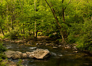The Nature Center Prints - Spring on the Middle Patuxent Print by Kathi Isserman