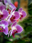 Jeff Mcjunkin Metal Prints - Spring Orchids I Metal Print by Jeff McJunkin
