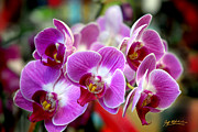 Blooming Digital Art Prints - Spring Orchids II Print by Jeff McJunkin