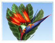 Bird Of Paradise Drawings - Spring Peeper 1 by Miki Krenelka