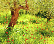 Lyrical Mixed Media - Spring Poppies Impressionism by Zeana Romanovna