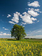 Green Field Prints - Spring Rhapsody Print by Davorin Mance