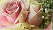 Spring Romance Pink Roses Print by Danielle  Parent
