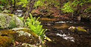 Connecticut Scenery Prints - Spring Stream Print by Bill  Wakeley