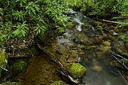 Mountain Stream Prints - Spring Stream Monongahela National Forest Print by Thomas R Fletcher
