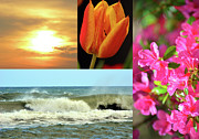 Spring Summer Collage Print by Sandi OReilly