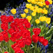 Primary Colors Art - Spring Sunshine by Carol Groenen