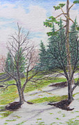 Bare Trees Drawings Framed Prints - Spring Thaw Framed Print by Frank Warsinski
