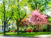 Azalea Bush Photo Prints - Spring - The Trees Are Flowering On My Street Print by Susan Savad