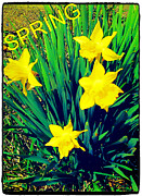 Thommy Mccorkle Digital Art Metal Prints - SpRiNg Metal Print by Thommy McCorkle