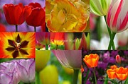 Blume Prints - Spring Tulips Entertainment Print by Juergen Roth