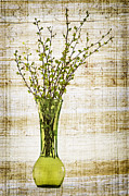 Growing Water Posters - Spring Vase Poster by Elena Elisseeva