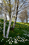 Florescence Posters - Spring view Poster by Gynt  
