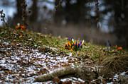 Oleksandr Maistrenko - Spring vs winter