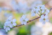 Jenny Rainbow - Spring Whisper
