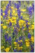 Golden Flowers Metal Prints - Spring Wildflower Bouquet  Metal Print by Saija  Lehtonen