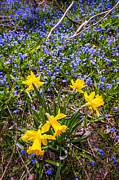 Wild-flower Photo Posters - Spring wildflowers Poster by Elena Elisseeva