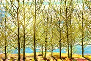 Sharon Marcella Marston - Spring Wood