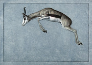 Animal Drawings - Springbok by James W Johnson