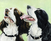 Springer Spaniel Paintings - Springer Beggers by Charlotte Yealey