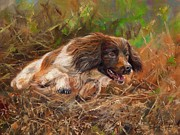 Springer Spaniel 2 Print by David Stribbling