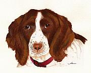 Spaniels Originals - Springer Spaniel  by Nan Wright