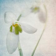 Springflower Print by Annie  Snel