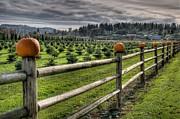 Spencer McDonald - Springhetti Road Pumpkins