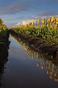 Skagit Valley Posters - Springs Beautiful Reflection Poster by Mike Reid