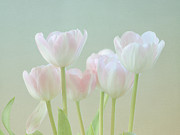 White Tulip Framed Prints - Springs Pastels Framed Print by Kim Hojnacki
