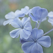 Blue Flowers Photos - Springs Sonnet by Kim Hojnacki