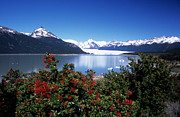 Argentina - Springtime at Perito Moreno by James Brunker