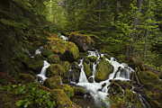 Pacific Northwest Framed Prints - Springtime Cascades Framed Print by Andrew Soundarajan