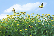 Butterflies Photo Prints - Springtime Print by Diane Diederich